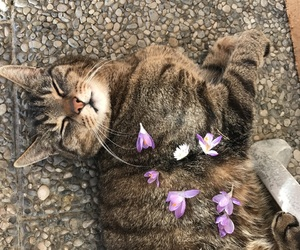 cat, flower, and meow image