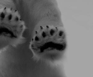 paws, bear, and animal image
