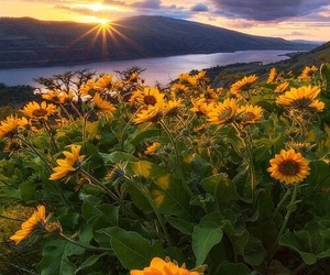 nature, beautiful, and flowers image