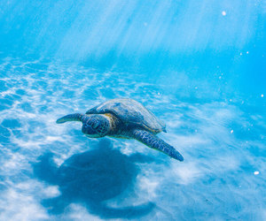 ocean, sea, and turtle image