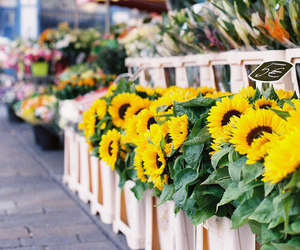 flowers, yellow, and sunflowers image