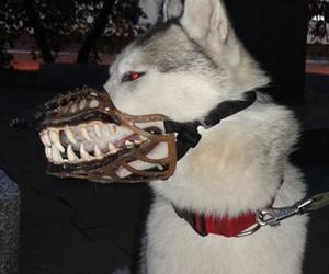 dog, animal, and dark image