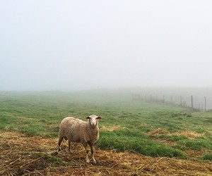 animal, fog, and pasture image