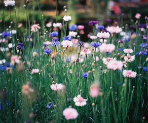 flowers, nature, and pretty image