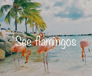 flamingos, travel, and todolist image