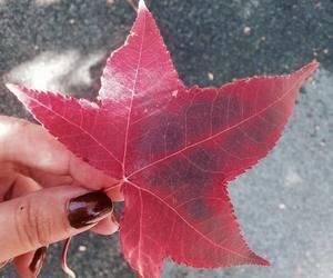 colours, fade, and fall image