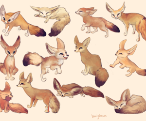 character design, fennec fox, and fennec foxes image