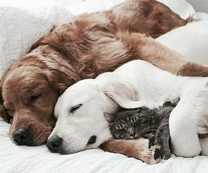 tumblr inspiration, animals cats dogs, and cute adorable pets image