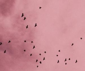 background, birds, and lockscreen image