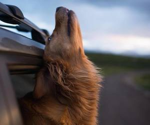 animal, country side, and dog image