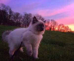 cat, sky, and meow image