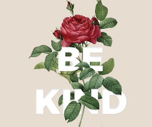 frase, indie, and roses image