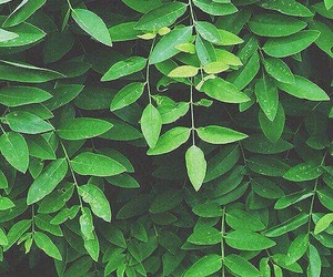leaves, aesthetic, and green image