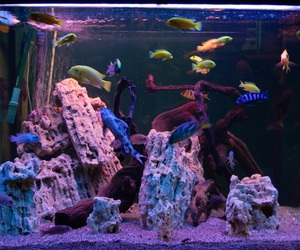 aquarium, blue, and fish image