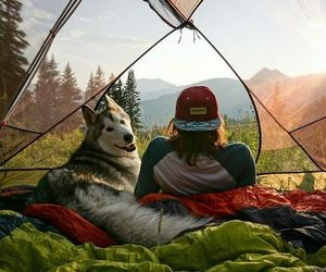 dog, nature, and camp image
