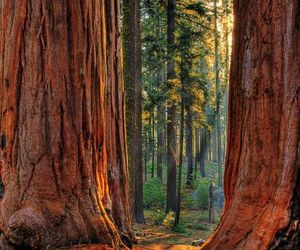 nature, tree, and california image