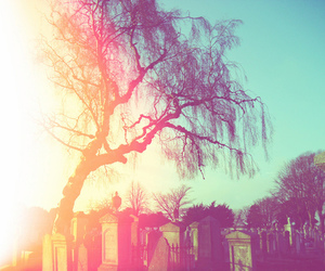 cemetery and tree image