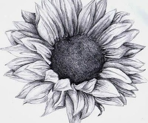 sunflower, flowers, and drawing image