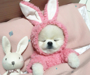 pink and dog image
