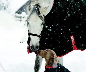 horse, dog, and winter image
