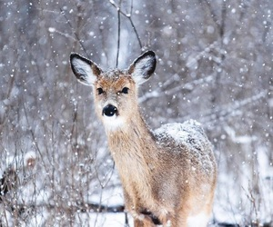 december, snowing, and winter image