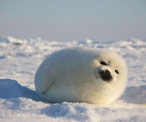 seal and snow image