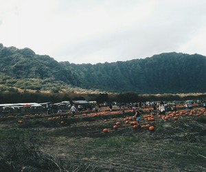 tumblr, pumpkin patch, and fall image