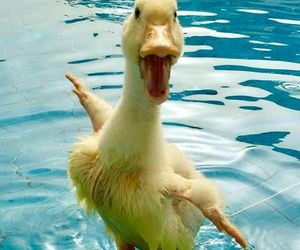 duck, funny, and sweet image