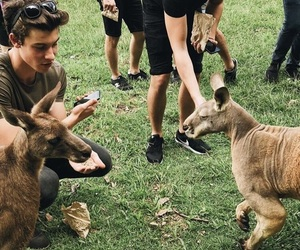shawn mendes, australia, and boys image