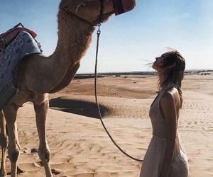 camel, desert, and summer image