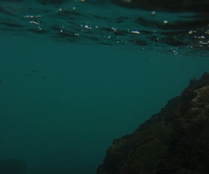 dive, photography, and sea image