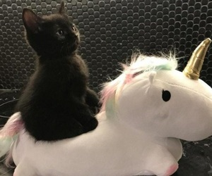 cat, cute, and unicorn image