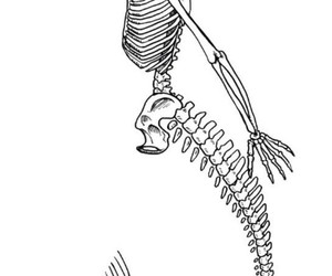mermaid and skeleton image
