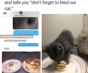cat, funny, and pancakes image