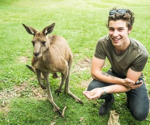 shawn mendes, kangaroo, and animal image