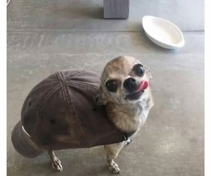 funny, dog, and turtle image