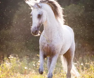 horse, beautiful, and white image