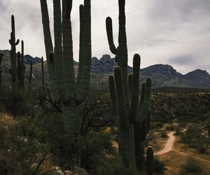 aesthetic, cactus, and hiking image