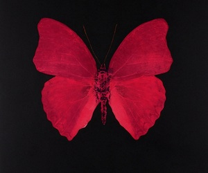 red and butterfly image