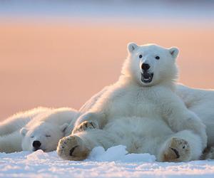 animals, polar bears, and cute image