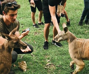 australia, mendes army, and boys image
