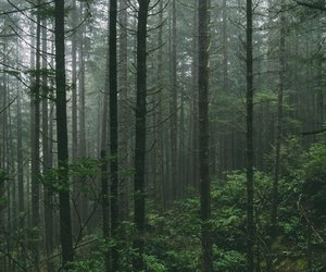 aesthetic, foggy, and forest image
