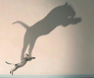 cat, animal, and shadow image