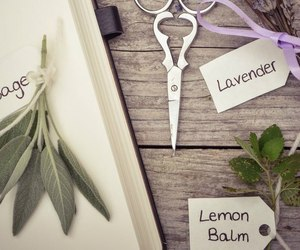 herbs, lavender, and vintage image