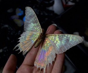 butterfly, aesthetic, and grunge image