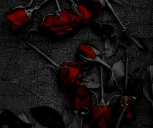 black, photography, and roses image
