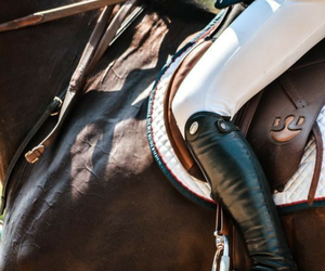 horse, equestrian, and photography image