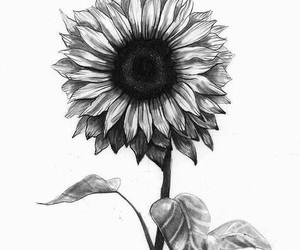 sunflower, art, and flowers image
