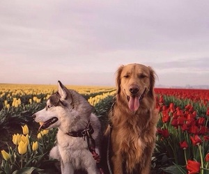 animals, fields, and indie image