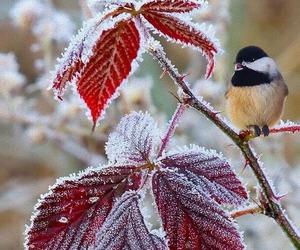 bird, winter, and snow image